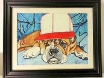 perro con gorra