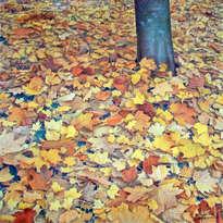 otoño-1