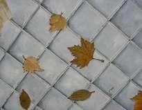 otoño en la acera