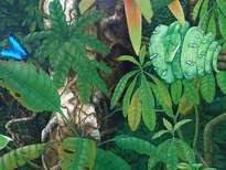 (fragmento) amazonia vive