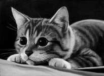 gatito al acecho