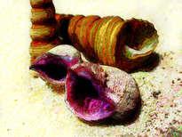 caracoles púrpura