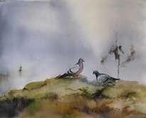 pareja de palomas