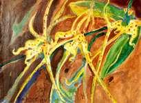 orchideacea