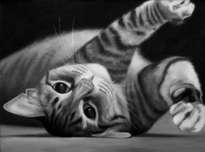 gatito de espaldas