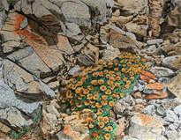 flores entre las rocas