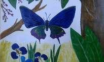 mariposas, dos