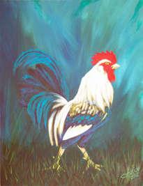 mi gallo