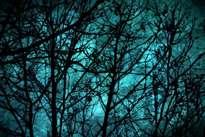 bosque encantado | enchanted forest