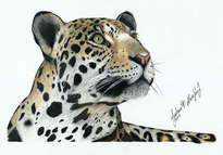 jaguar o yaguaraté (panthera onca)