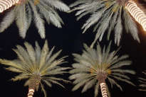 palms with personality