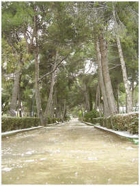 parque municipal de altura - 1.139