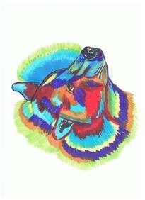oso multicolor
