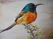 bird. hummingbird