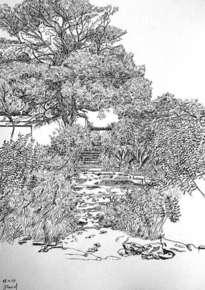 pinos con arbustos de vilanova