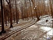 bosque nordico