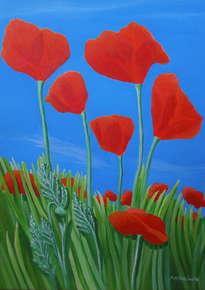 giant poppies - amapolas 1