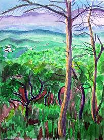 paisaje con monte bajo en montseny