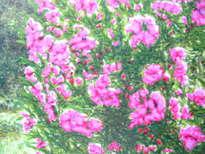 sunshine on flowers