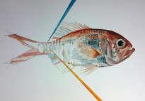 pez con líneas 2