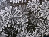 dimorfotecas  en blanco y negro