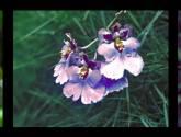 flores composición la vida la vejes y la muerte