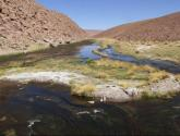 variedad desiertica-desertic landscape