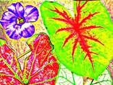 plantas 1