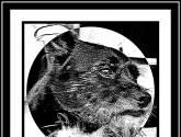 2010/d 06    nuestro perrito elmer