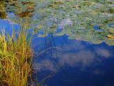 el cielo en la laguna