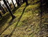 sombras y figuras
