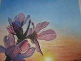 flor almendro al  sol