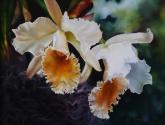 orquideas de amor örchids of love