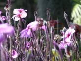 elodie garden