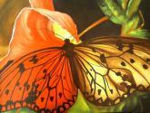 mariposa en central park