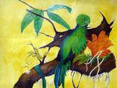 quetzal en la rama