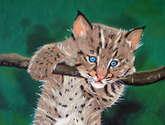 bebé lince,luchs-baby,bébé lynx