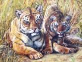 i - tiger!