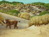 lince entre dunas