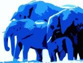 blue elephants ii