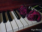 piano con rosas deshidratadas,1.