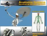 anatomia humana- sistema nervioso