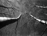 serie árboles - ramas 2