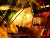 calor de otoño