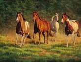 caballos de jarabacoa