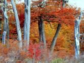 otoño mágico
