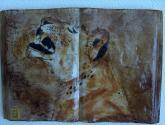 lioness of botswana
