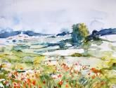 campos de belgida, amapolas ii