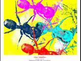 strange ants ii