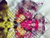 pez uno